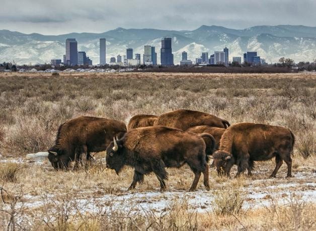 Rocky Mountain Arsenal Refuge