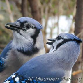 Do Male And Female Birds Always Look Different Birdnote