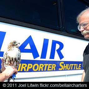 The hawk and the bus