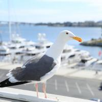 A gull on San Diego Bay