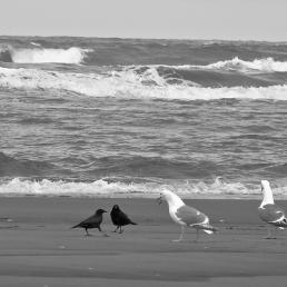Crows and gulls at the shore