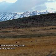 a.m. Colorado - Gunnison sage-grouse