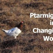 Ptarmigan in a Changing World