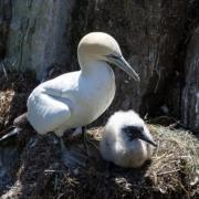 The Birds of Cape St. Mary
