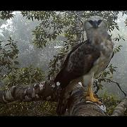 Harpy and Crested eagle caught on camera in the canopy of the Amazon Rainforest!