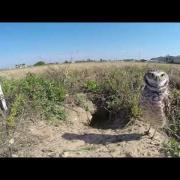 A Few Minutes with the Burrowing Owls