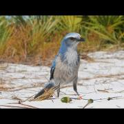 At Home In the Florida Scrub