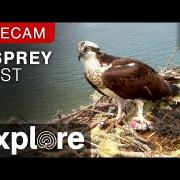 Audubon Osprey Nest powered by EXPLORE.org