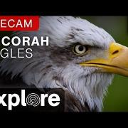 Decorah Eagles - North Nest powered by EXPLORE.org